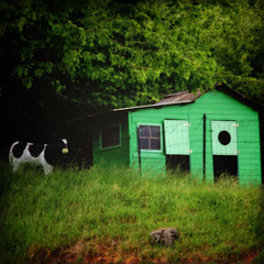 la petite maison dans la prairie (_wysiwyg_) Tags: trees france green texture nature field grass vintage square landscape countryside cow shed kitsch vert hut arbres campagne nordpasdecalais champ vache cabane herbe carr littlehouseontheprairie fakecow faussevache