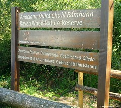 Raven Wood Nature Reserve, Curracloe. (O Suave Gigante) Tags: ireland blackwater wexford curracloe ballinesker ballinaclash ballyconnigar ravennaturereserve ravennaturereservewexford ballynaclash