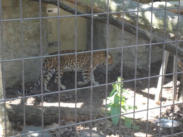 次はもうじゅう館へ。|旭川市旭山動物園