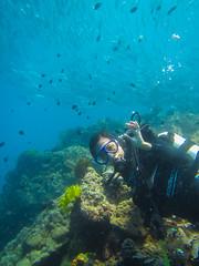 Diving in Anilao (julesnene) Tags: underwater philippines dive diving anilao batangas julesnene juliasumangil philippinecoralreef canonpowershotd20