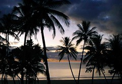 DSC00793fr (Mangiwau) Tags: blue trees sunset sky tree bird beach silhouette statue island dawn coast big palm mission cairns tully cassowary townsville dunk cocnut ingham