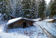 Snow Cabin (brentflynn76) Tags: snow forest landscape photo cabin woods
