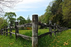 Split Rail (2bmolar) Tags: fence day128 day128365 fencedfriday 365the2015edition 3652015 8may15