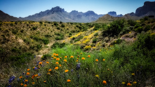Color in the Desert_150550