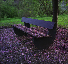 Rollies Moselle Trip (05) (Hans Kerensky) Tags: trip 120 tlr rolleiflex river bench fuji blossom fallen april 100 cochem reala automat mosel 35a 2015 tessar plustek k4a opticfilm anywhitefieldtagbyflickrsspamtagbot