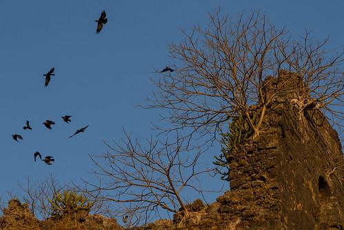 Crows & Ruins
