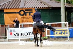 IMG_0615 (dreiwn) Tags: horse pony pferde pferd equestrian horseback reiten horseriding dressage hnger 2015 reitturnier dressur pferdekopf dressuur junioren ridingarena pferdesport doublebridle reitplatz reitverein pferdehnger kandare turnierreiten dressurprfung ldressur