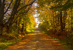 Ripley Hill Road (Matt Champlin) Tags: monday fall autumn foliage colorful road theroad roadtrip travel leaves leaf forerst preserve fingerlakes cny otisco skaneateles ny canon 2016 peace peaceful idyllic nature landscape tunnel