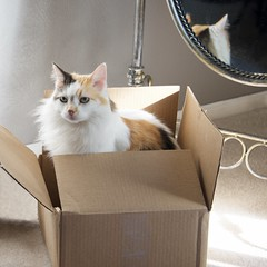 Karma in a Box (The Good Brat) Tags: co us cat feline box karma mirror reflection pose pet