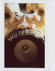 welcome (Judy M. Boyle) Tags: fallpolaroidweek2016 polaroidweek polaroid roidweek fuji instax wide film instant integral lomoinstantwide lomography closeuplens close up macro cats dragonfly welcome