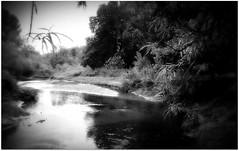 (Riik@mctr) Tags: wilmslow cheshire twinnies bridge carrs park bollin river valley riverside walk woodland nokia n95 fone phone blackandwhite monochrome surreal serene landscape