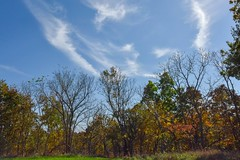 Limbs and Clouds (thefisch1) Tags: creek kansas fall color colorful water tree sky cloud interesting osage cuestas leaves leaf oogle calendar cirrus upright