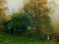 One foggy day in October (janne.skei) Tags: fog foggy mist old cabin house tree trees rock barn colorful color grass autumn fall sky outdoor october orange moment woods norway magic mountains flowers farm panasonic lumix