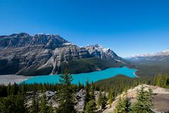 Banff 89 (4brownies) Tags: banff alberta canada 2016 vacation peyto lake