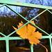Löv i ram