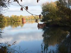 Arnhem 29102016 (megegj)) Tags: gert natuur nature