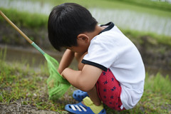 Kids playing in the paddy field (Iyhon Chiu) Tags:        japanese japan 2016 saitama paddy field kid children    child play playing