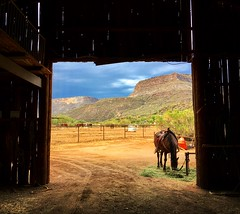 (jdykhuizen) Tags: iphone film arizona locationscout barn horse wildwest