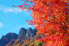 Do you like autumn leaves? (sonica@2006) Tags: do you like autumn leaves myogisan really i was attracted japan gunma xm1 xf35mm fujinon fujifilm