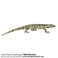 Nile Monitor with Color Pencils (drawingtutorials101.com) Tags: nile monitor lizards reptiles animals african smallgrain lizard water leguaan river sketching pencil sketch sketches drawing draw speeddrawing timelapse timelapsevideo coloring color how