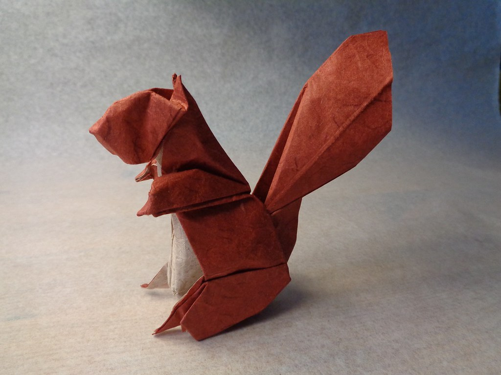 the world u0026 39 s best photos of origami and squirrel