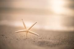 Family star 47/52 Espacio negativo (Nathalie Le Bris) Tags: star toile beach plage monochrome bokeh