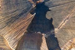 ckuchem-7091 (christine_kuchem) Tags: abholzung baum baumstmme bume einschlag fichten holzeinschlag holzwirtschaft wald waldwirtschaft