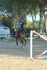 IMG_4891 (Bas & Emily) Tags: horse horses horsejumping jump jumping rijden paard paarden springen springwedstrijd sport belleepoque hindernis