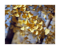 (Daiku_San) Tags: film ishootfilm colorfilm mediumformat usetheforce 120film 6x7 fallcolors pentax67 smcpentax672004 kodakektar100 epsonv500