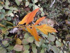 2016-10-25-7245 (vale 83) Tags: autumn leaves nokia n8 macrodreams lunaphoto colourartaward coloursplosion flickrcolour