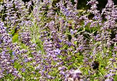Bee in Flowers at Pokagon State Park Lodge (svandagr) Tags: flowers floral wildflowers nature flora park trail hike pokagonstatepark indiana outdoor summer indianastateparks statepark flower