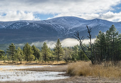 Cairngorms..on the banks of Loch Morlich (LoneWolfA7ii) Tags: loch morlich cairngorms trees sky clouds light water mountain snow sony a7ii scotland bright landscape mist lake green