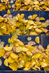 Yellow Leaves // Autumn in Amsterdam (Merlijn Hoek) Tags: leaves bladeren herfst autumn merlijnhoek merlijn hoek fotograaf fotografie photographer photography man autodidact amsterdammer nikon nikkor camera kamera full fullframe d810 nikond810 fullframedigitalslr digitalslr slr 35mmformat 36×24mm 35mm 36megapixel digitalsinglelensreflex straat street straatfotografie streetphotography