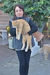 Entre Rios (Belu Navarro) Tags: portrait cat retrato exterior dia outside argentina gato mascotas