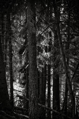 deep forest (imagomagia) Tags: art artphoto artphotography autumn blackandwhite blackandwhitephotography bnw cinematography fineartphotography forest fujix fujifilm light magicrealism naturallight nature noiretblacphotographie noiretblanc tree trees