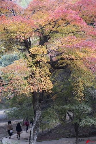 Fall foliage in Kyoto
