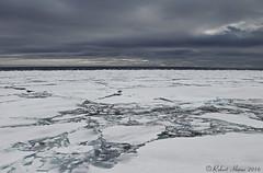 Arctic Pack Ice (Robert Horne Wildlife Photography) Tags: arcticpackice packice driftice seaice ice arctic arcticcircle svalbard arcticocean ocean