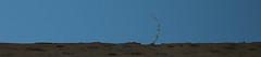 Echappée belle (Pi-F) Tags: mur ligne pousse végétation seul isolé espoir fuite bleu ciel