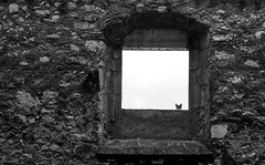 The window cleaner... (prals1969) Tags: cat catalunya catalonia santes creus monastery