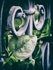 Evergreen / Immergrün (Silke Klimesch) Tags: fence hff happyfencefriday zaun plastikblumen plasticflowers grün green immergrün evergreen wroughtiron schmiedeeisern fake foliage olympus omd em5 zuiko35mm135