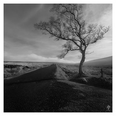 A Tree Grows... (fearghal breathnach) Tags: lonetree sallygap wicklow wicklowmountains wildnerness lonelyroad road leadlinglines tree monochrome mono blackwhite bw squareformat square ireland greatoutdoors border