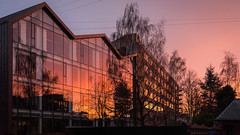 Sunset Reflected (Ghita Katz Olsen) Tags: sunset glass windows trees reflection copenhagen islandsbrygge kombit