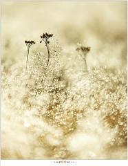 Vochtig (nandOOnline) Tags: natuur morning nevel nature dauw mist landschap ochtend vocht strabrecht rijp zonsopkomst sunrise strabrechtse heide frost december landscape cold koud vorst fog