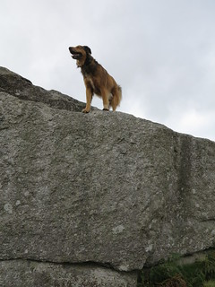 champion climber dog