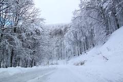 12000 °K (Xenofon Levadiotis) Tags: florina vitsi tree trees pine beech fir greece greek landscape fauna road δρόμο δρόμοσ οξυά βελανιδιά έλατο έλατα βίτσι φλώρινα δροσοπηγή φθινόπωρο τοπίο ελλάδα λξ plant outdoor foliage serene πορεία ανηφόρα επαρχία επαρχιακόσ δέντρο δέντρα δάσοσ forest βλάστηση χλωρίδα ελληνικό greeklandscape επαρχιακόσδρόμοσ χιονισμένοσδρόμοσ χιονισμένοσ λευκό λευκότοπίο παγωνιά πάγοσ χιόνι χιόνια χιονόπτωση all white snow snowy frozen freezer freeze cold winter χειμώνασ χειμερινότοπίο