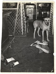 #Rocco the Great Dane guards the body of his friend, chef Luigi Rivieccio, who had just been stabbed to death in the restaurant where he worked (New York, July 31, 1941). [528x700] #history #retro #vintage #dh #HistoryPorn http://ift.tt/2gQxAFn (Histolines) Tags: histolines history timeline retro vinatage rocco great dane guards body his friend chef luigi rivieccio who had just been stabbed death restaurant where he worked new york july 31 1941 528x700 vintage dh historyporn httpifttt2gqxafn