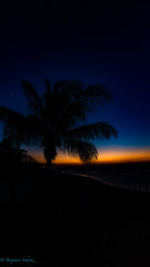 Palmtree Mexico (BS_86) Tags: canon eos 6d lightroom sunset sonnenuntergang palme palmtree mexico mexiko november night nacht ferien vacation outdoor travel reisen