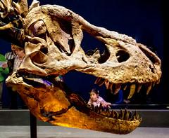20161206_110915 (durr-architect) Tags: tyrannosaurus rex trex town skeleton naturalis nature museum leiden exhibition fossil consevation carnivorous dinosaur montana black hills institute