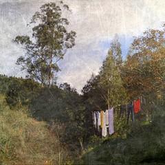 Secadora vegetal (acativa) Tags: texturas textures ropatendida ropa tendales otoo arboles eucaliptos rural rstico secar airelibre cotobad cotobade viascn acativa