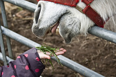 Don't forget to count your fingers....... (Andy Magee) Tags: horse andy animal canon mammal scotland hand feed magee erskine andymagee lamontfarm